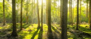 Sägewerk – Qualitäts-Holz aus klimafreundlichen Produktionsverfahren